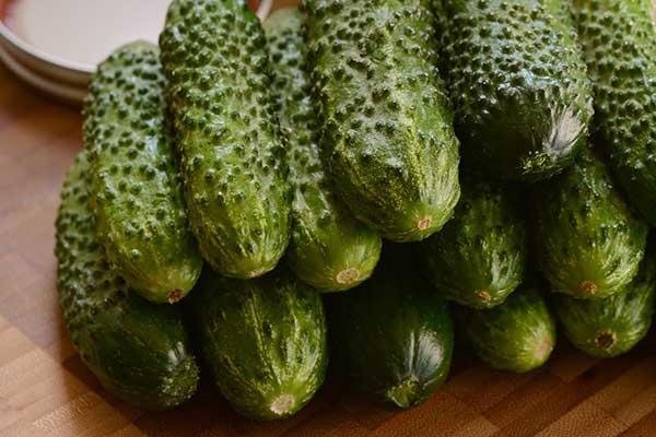 Cucumber GherKing