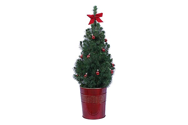 1 Gal Holiday Metal Pot Alberta Spruce
