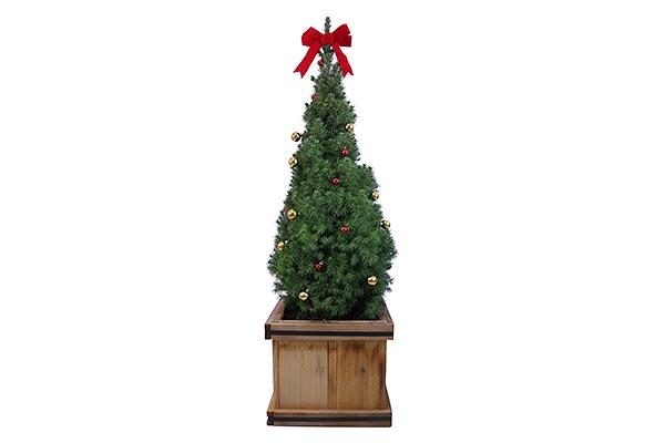 5 Gal Holiday Cedar Box Alberta Spruce